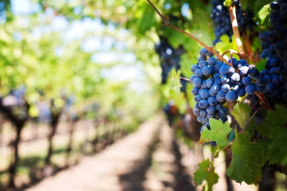 South African Wines - Hermanuspietersfontein Kaalvoet Meisie 2015